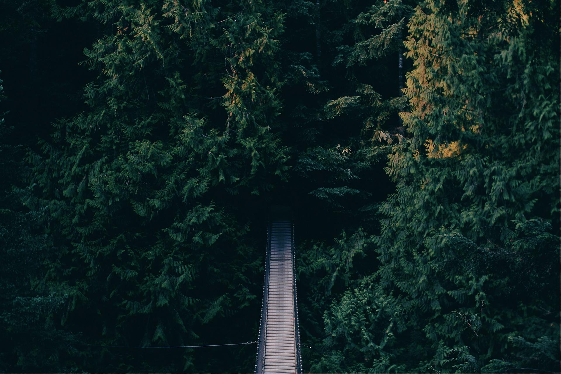 Análisis de riesgos y oportunidades en relación a la empresa y el entorno